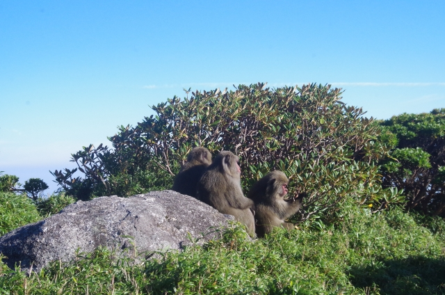 monkeys in high mountain